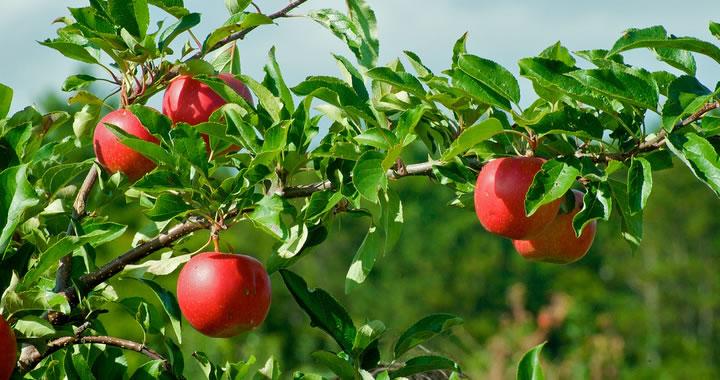 Actuele planten maart: Een heerlijke belofte