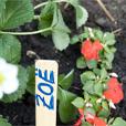 201334_tuinieren_zonder_tuin_2