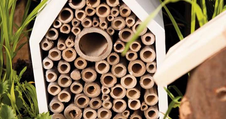 Tuintrends 2014: De biotope garden