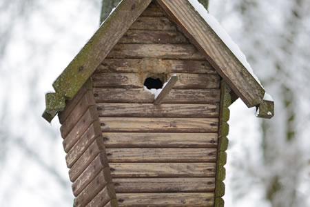 vogelhuisjes_schoonmaken_2