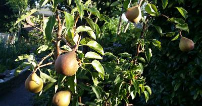 oogsten_in_de_tuin_september2